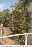 Govt Girl Degree College Dhowk Mangtal  plantaion pic-1.jpg